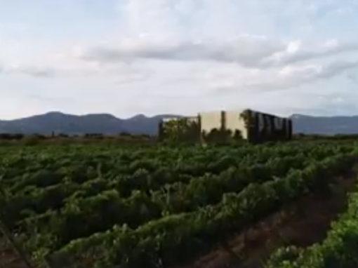 Vignerons Independientes de Huesca - Las Bodegas